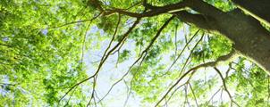 自然環境・都市計画